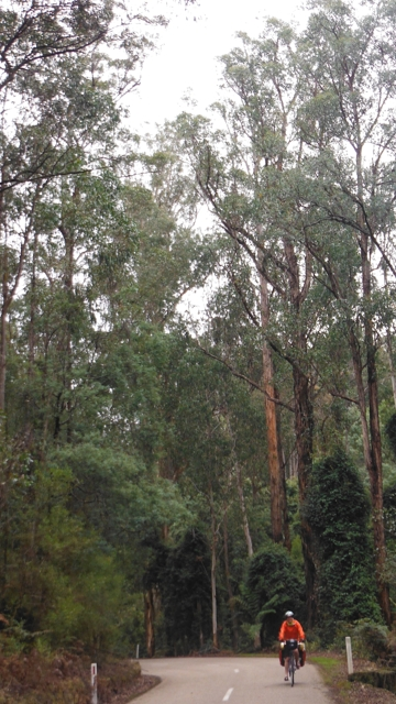 Spectacular Trees on the Bonang Highway